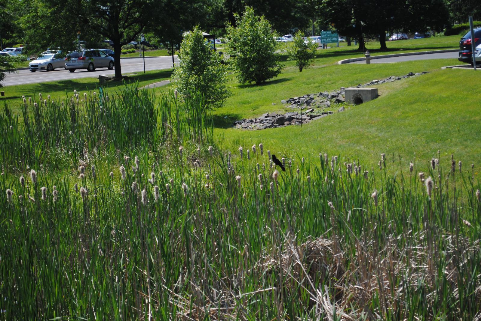 Click for more information about Green Infrastructure